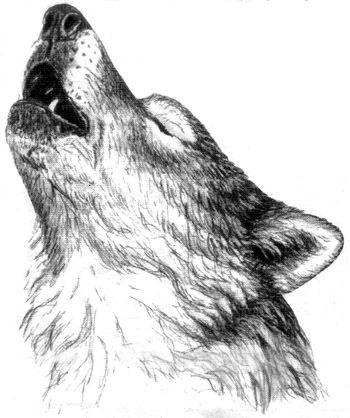 8790998a52974ca53c5229476185e836--howling-wolf-tattoo-tattoo-wolf